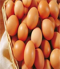 六盘水洋鸡蛋