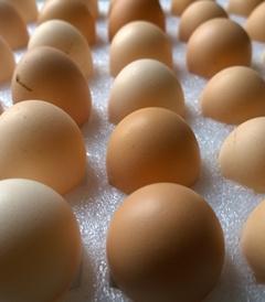 六盘水草鸡蛋