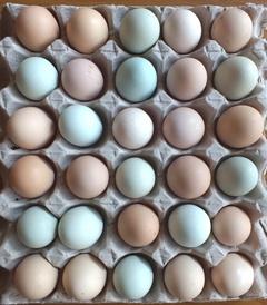 合肥草鸡蛋