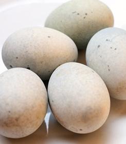 六盘水皮蛋